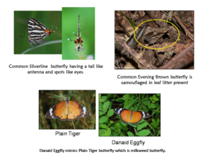 common butterflies